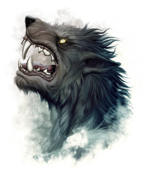 Howling werewolf Realistic portrait of howling werewolf on the white background. werewolf stock illustrations