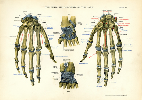 Vintage medical diagram stock illustrations