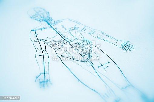 istock Human Anatomy 167763018