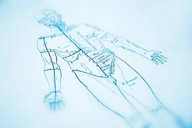 bildbanksillustrationer, clip art samt tecknat material och ikoner med human anatomy - acupuncture