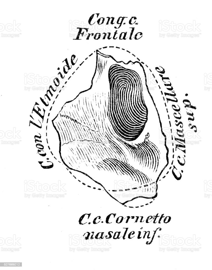 Ilustración de Ilustraciones Científicas De Anatomía Humana Hueso ...