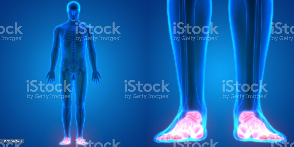 Human Body Bone Joint Pains Anatomy (Foot Joints) vector art illustration