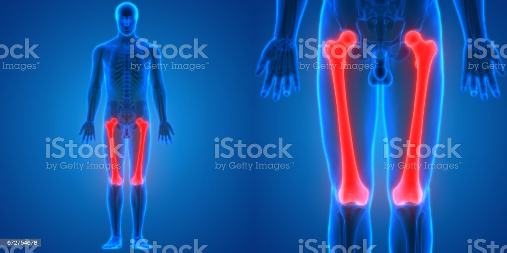 Human Body Bone Joint Pains Anatomy (Femur Bones) vector art illustration