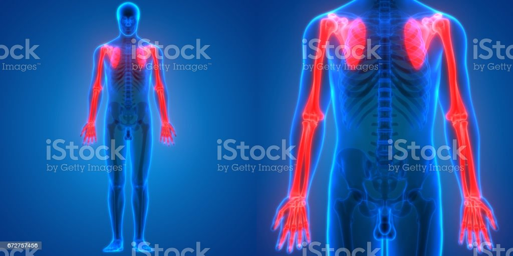 Human Body Bone Joint Pains Anatomy (Upper Limbs) vector art illustration