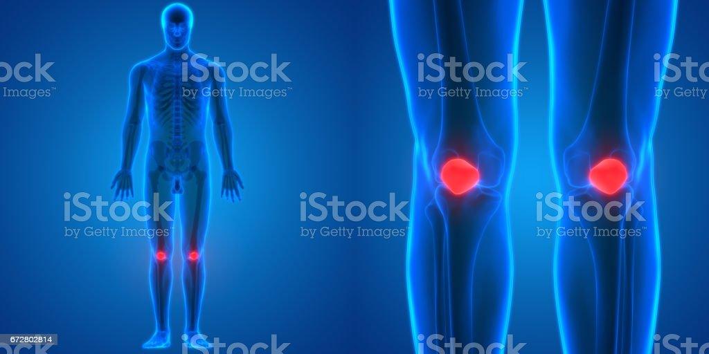 Human Body Bone Joint Pains Anatomy (Patella) vector art illustration