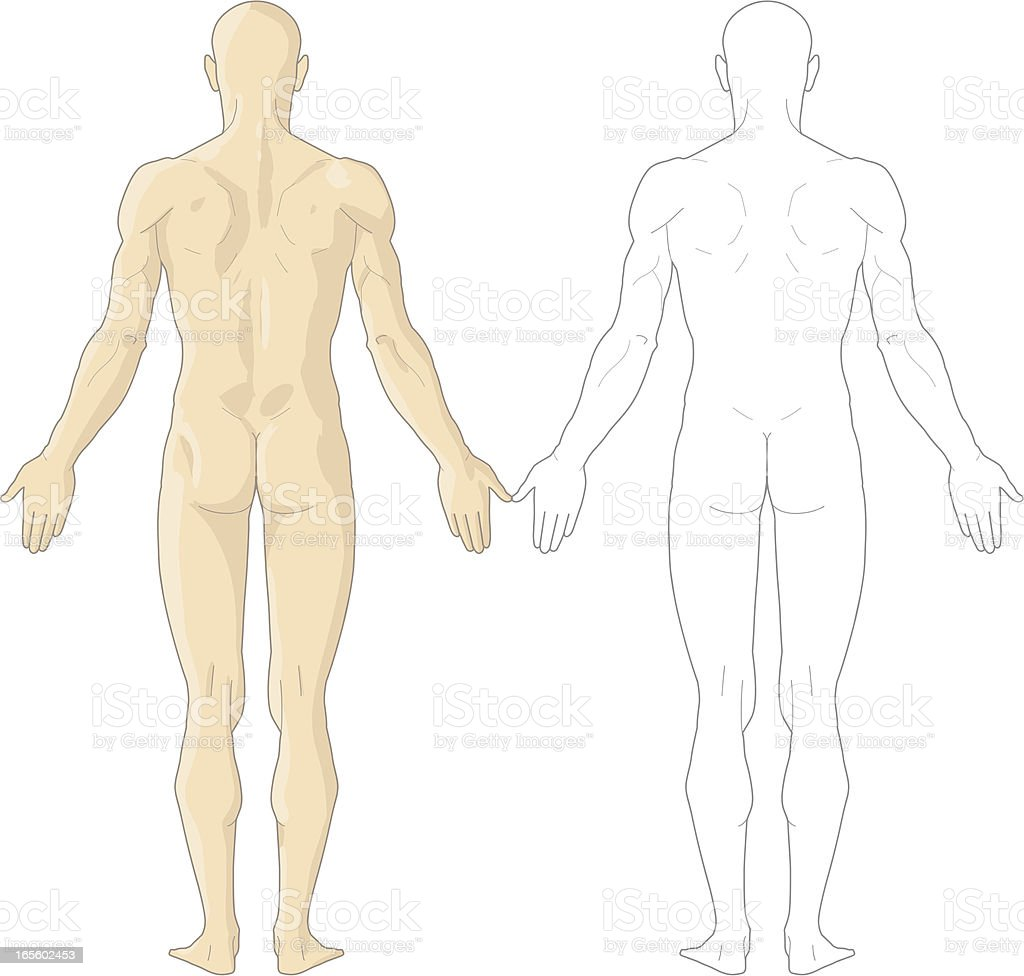 Human body stock vector art more images of anatomy 165602453 istock human body royalty free human body stock vector art amp more images of anatomy ccuart Image collections