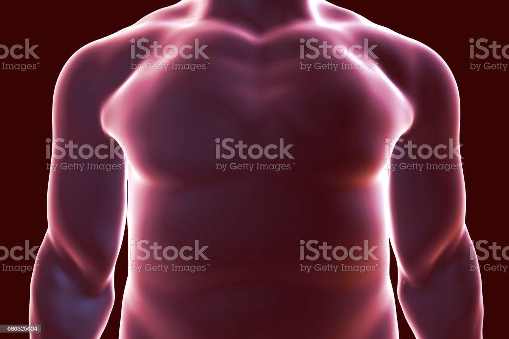 Human body silhouette, illustration vector art illustration