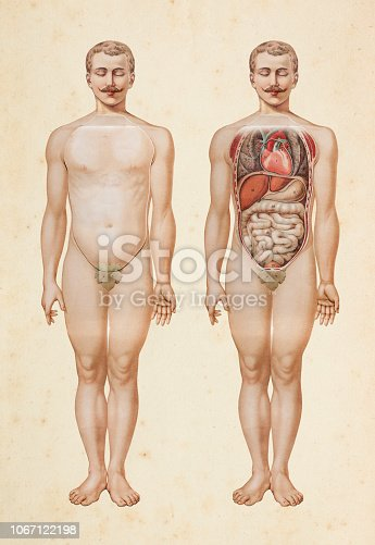 Steel engraving human body with inner organs illustration Original edition from my own archives Source : Platen Heilmethode 1894