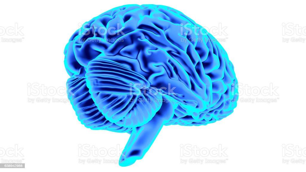 Human Brain 3d Render Stock Illustration - Download Image