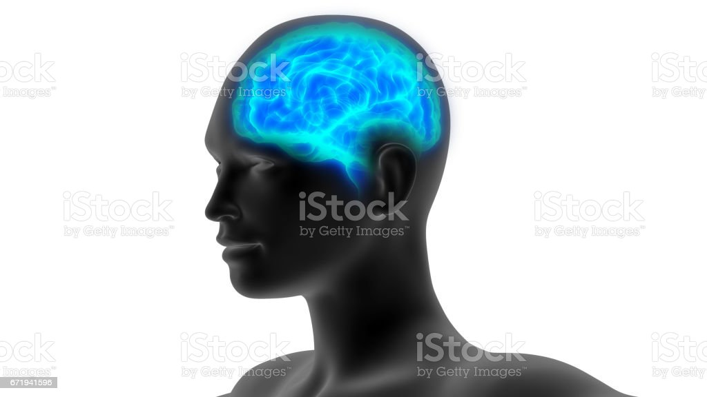 Human Brain Anatomy vector art illustration