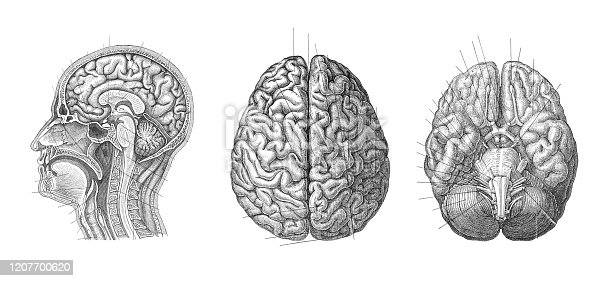 Human brain anatomy – Vintage engraved illustration from Meyers Konversations-Lexikon 1897