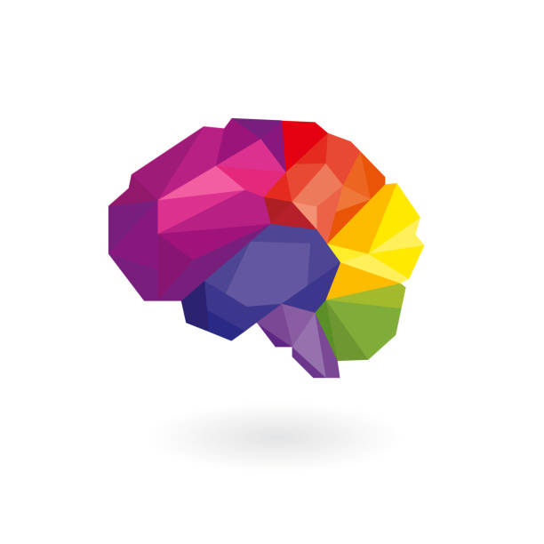 Human brain in rainbow color (which include of 6 parts based on anatomical) isolated on white background. Low poly style vector for concept of creative, smart and strategy. temporal lobe stock illustrations