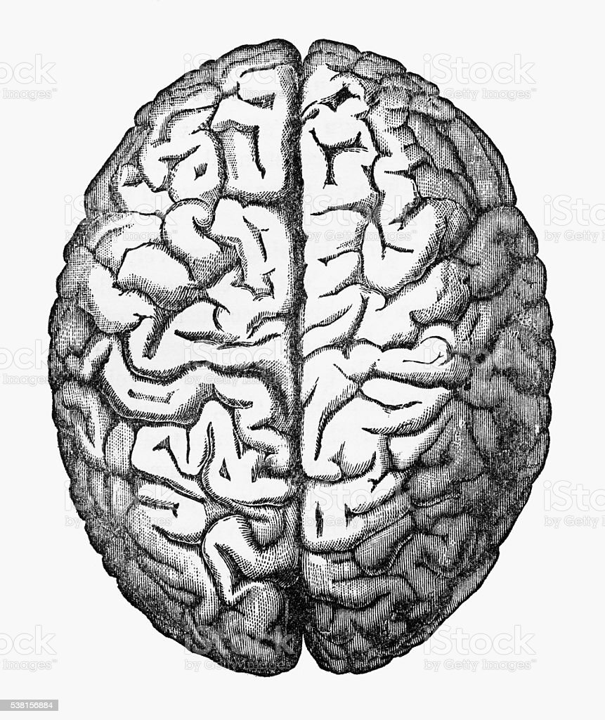 Human brain isolated on white engraved illustration circa 1880 stock human brain isolated on white engraved illustration circa 1880 royalty free human brain isolated ccuart Images