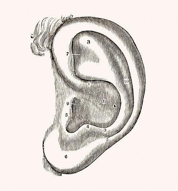 ilustraciones, imágenes clip art, dibujos animados e iconos de stock de oreja humana médicos medio siglo 19 - medicina del deporte