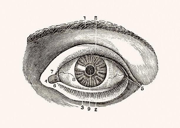 ilustraciones, imágenes clip art, dibujos animados e iconos de stock de ojo humano médica medio siglo 19 - medicina del deporte