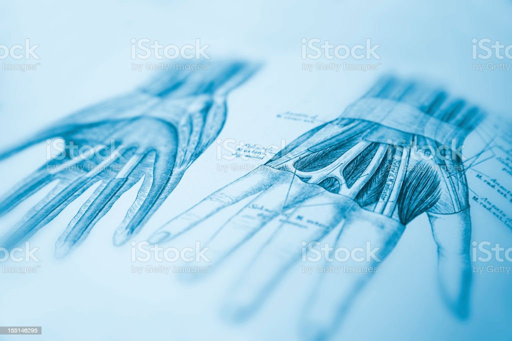 Human Hand vector art illustration