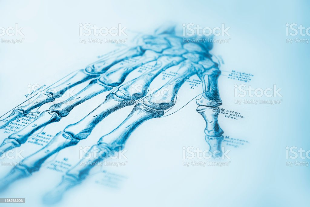 Human Hand royalty-free human hand stock vector art & more images of anatomy