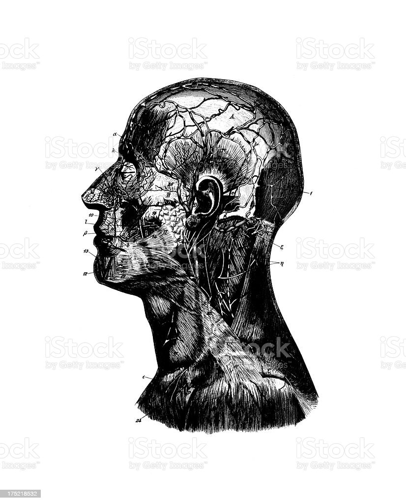 Human Head Antique Medical Scientific Illustrations And Charts stock ...