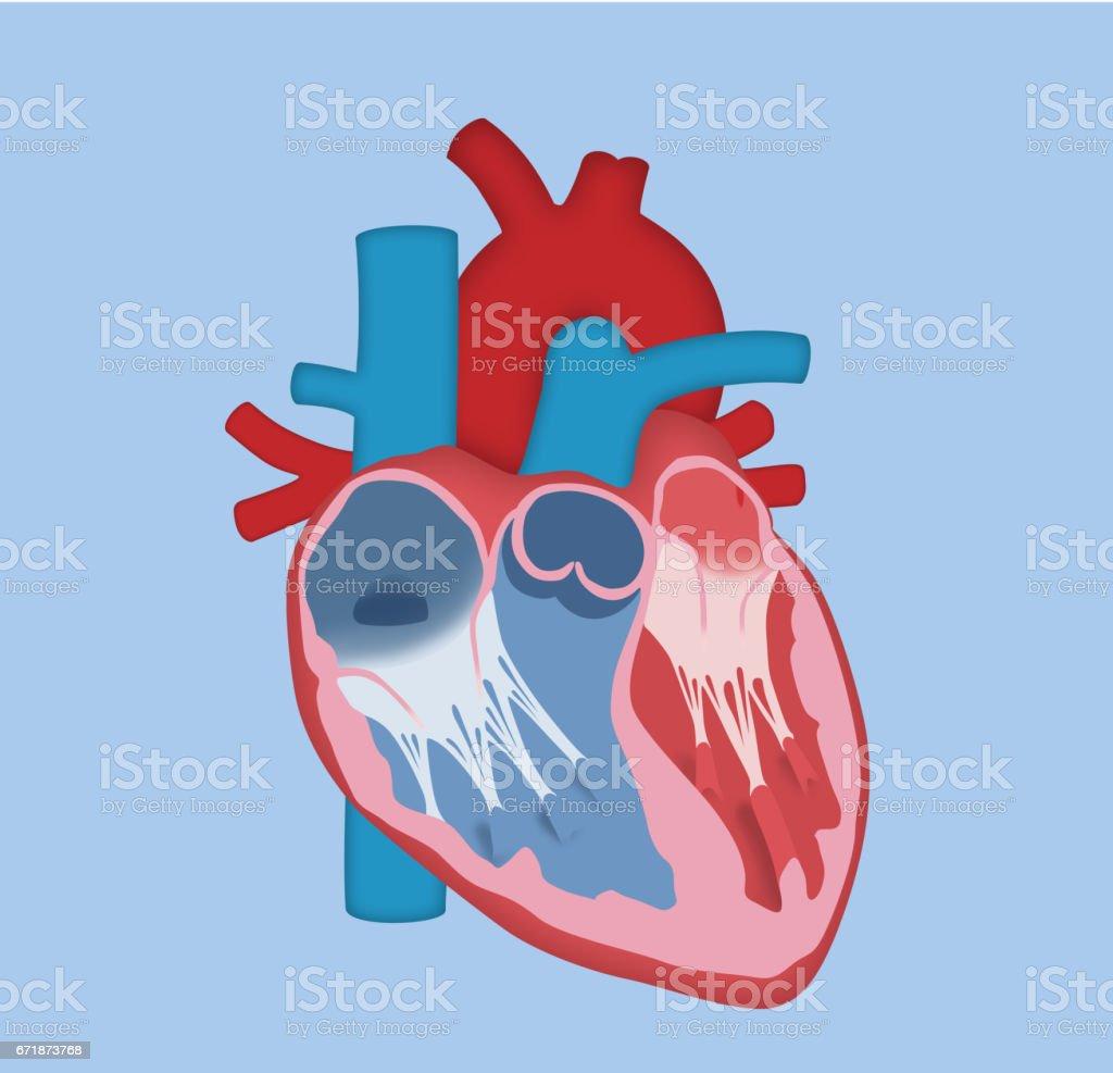 Menschlichen Herzens-Grundausführung – Vektorgrafik