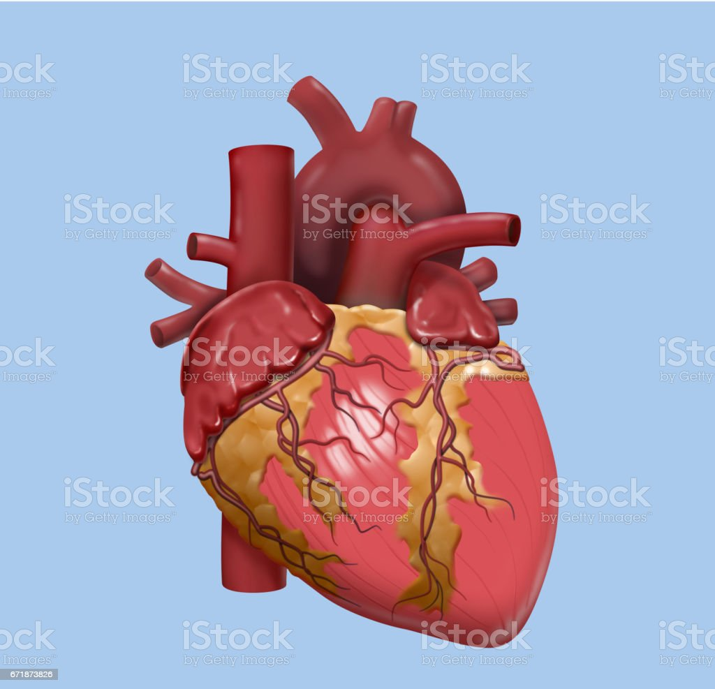 Human Heart Detailed Design Stock Vector Art More Images Of
