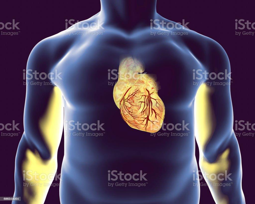 Human heart with heart vessles vector art illustration