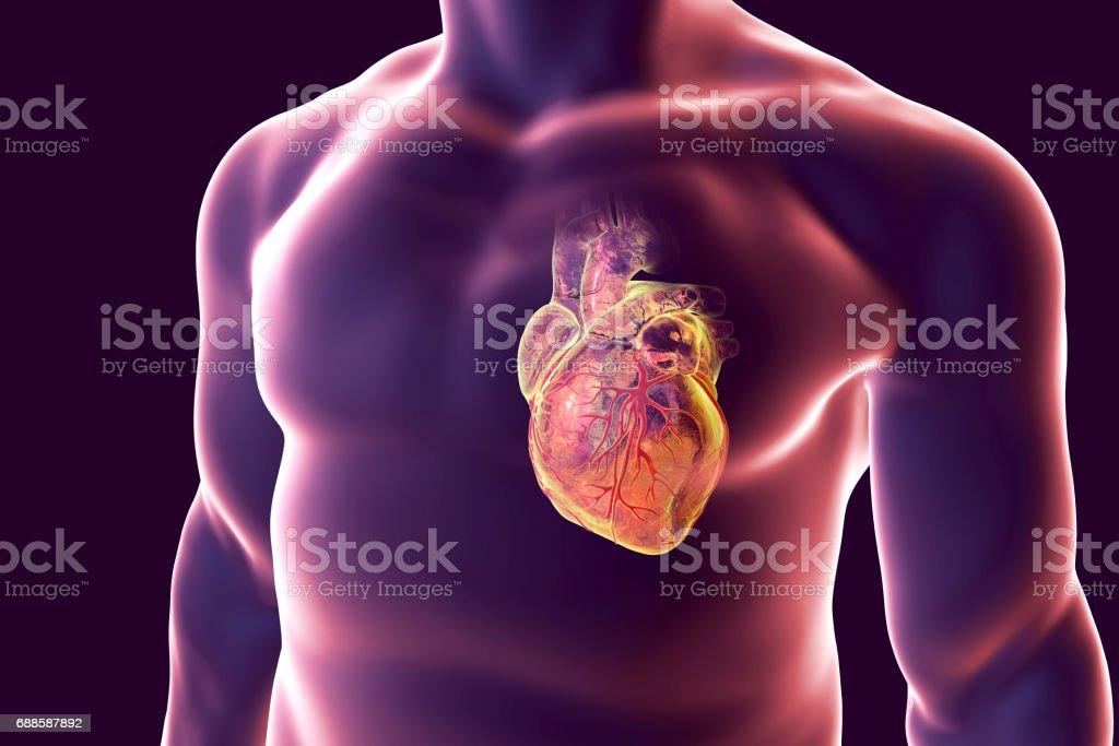 Menschliches Herz Mit Herz Booten Vektor Illustration 688587892 | iStock