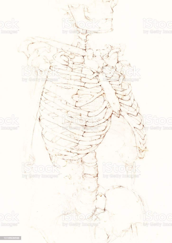 Human Skeleton Drawing Stock Vector Art More Images Of 1980 1989