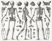 骸骨の彫りこみ文字