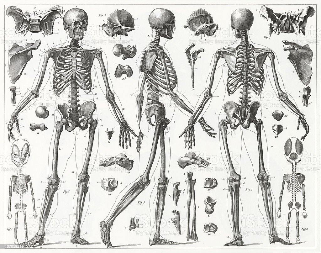 Human Skeleton Engraving vector art illustration