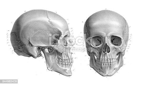 Human skull anatomy illustration 1866