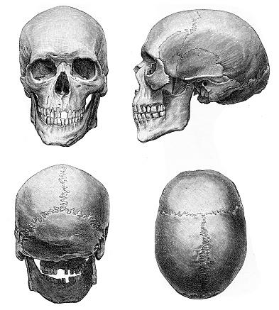 Ilustración de anatomía del cráneo humano 1894