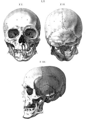Human Skull   Antique Medical Illustration (Isolated on white)