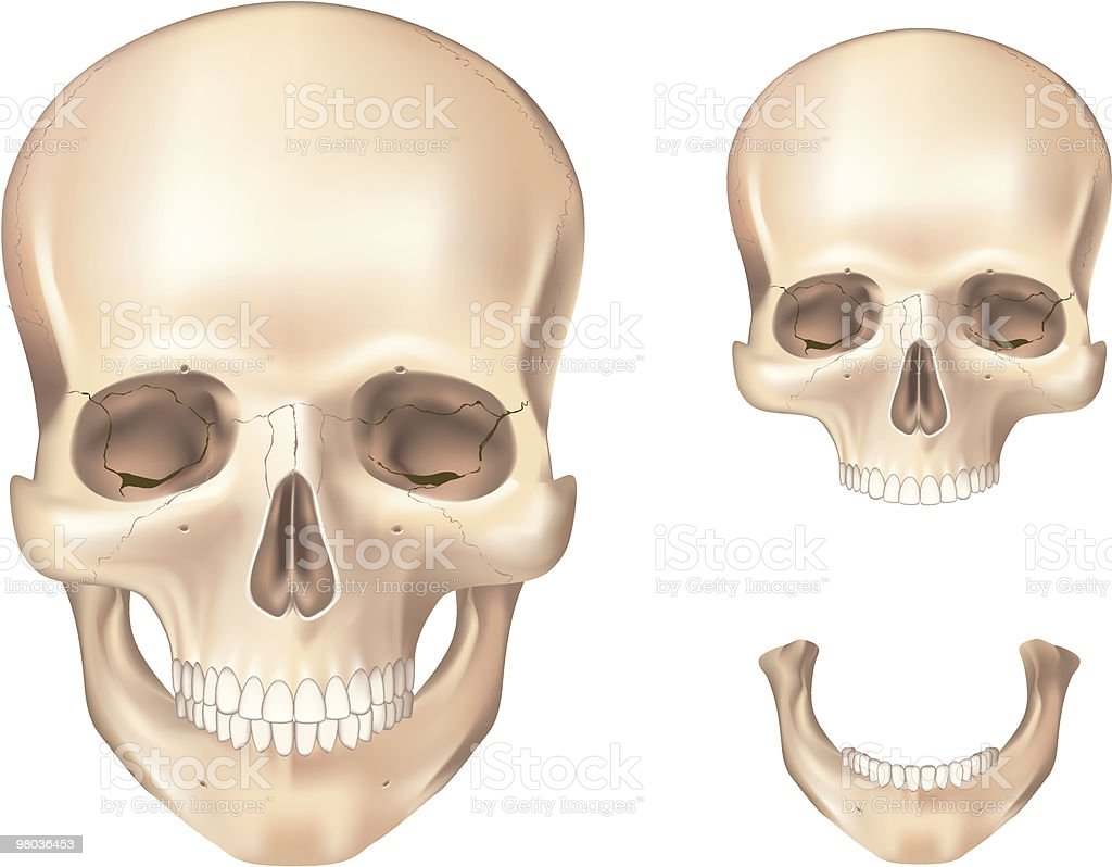 Human skull front view royalty-free human skull front view stock vector art & more images of biology