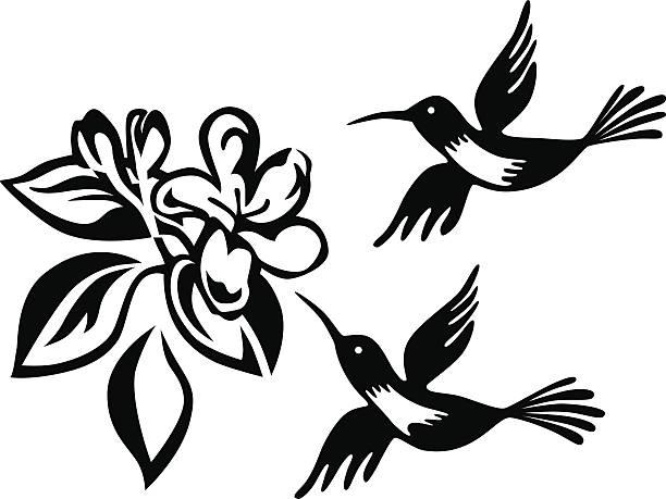 humming birds and honeysuckle vector art illustration