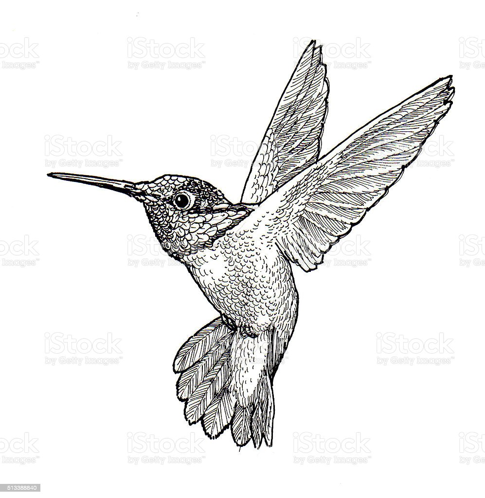Line Art Hummingbird : Hummingbird stock vector art more images of flying