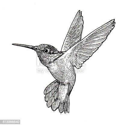 Ilustración de Colibrí y más banco de imágenes de Colibrí 513388840 ...