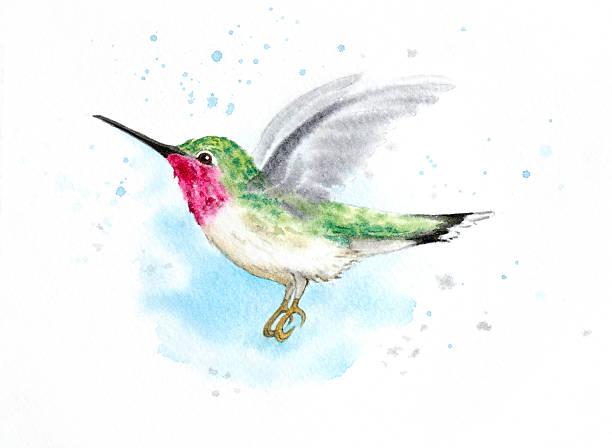Hummingbird In Flight vector art illustration
