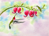 istock Hummingbirds and Bleeding Hearts 471192053