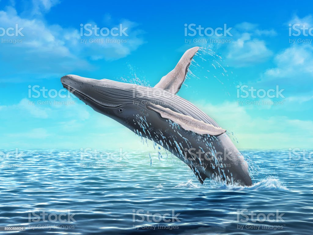 Humpback whale jumping vector art illustration