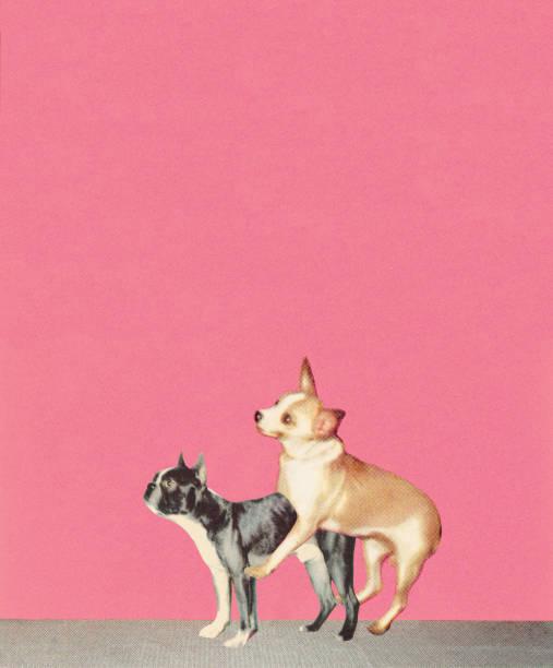 Humping les chiens - Illustration vectorielle