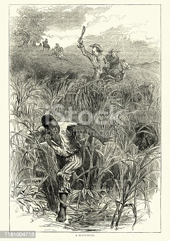 Vintage engraving of Hunting a runaway slave, Southern USA, 19th Century. African american man running through long grass chased by men on horseback with dogs