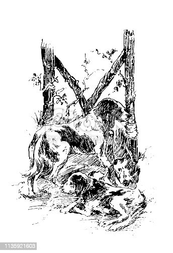 Illustration of a Hunting pointer dogs