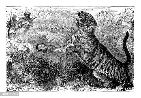 Hunting The Big Tiger