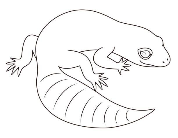 ヒョウモントカゲモドキ Eublepharis macularius character illustration ベクターアートイラスト