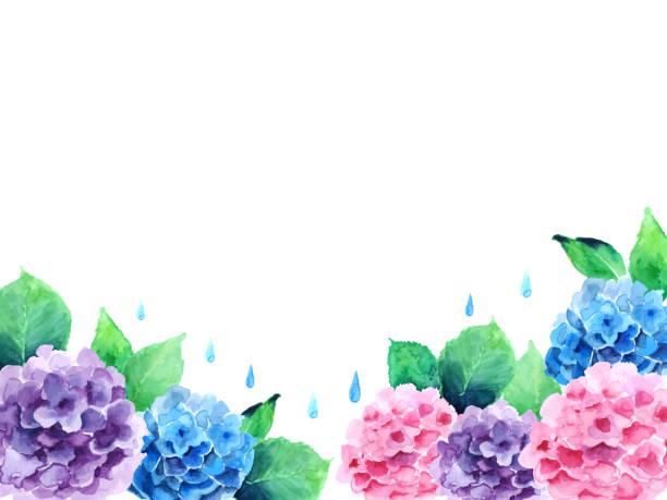 紫陽花 雨 イラスト素材 Istock