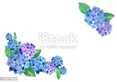 Hydrangea watercolor illustration frame decoration