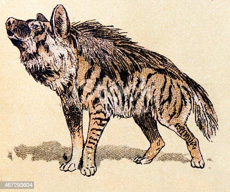 istock Hyena, mammals animals antique illustration 467293604
