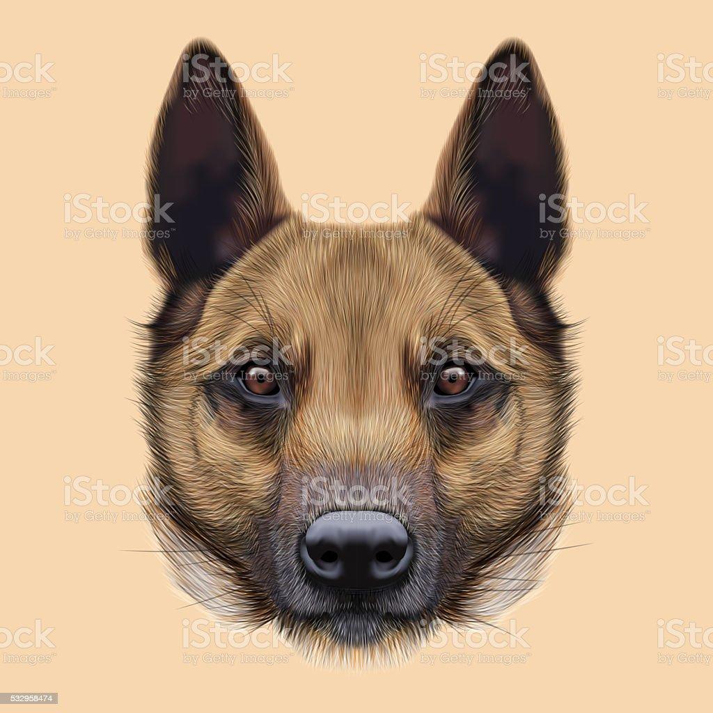 Illustrated Portrait of Malinois dog. vector art illustration
