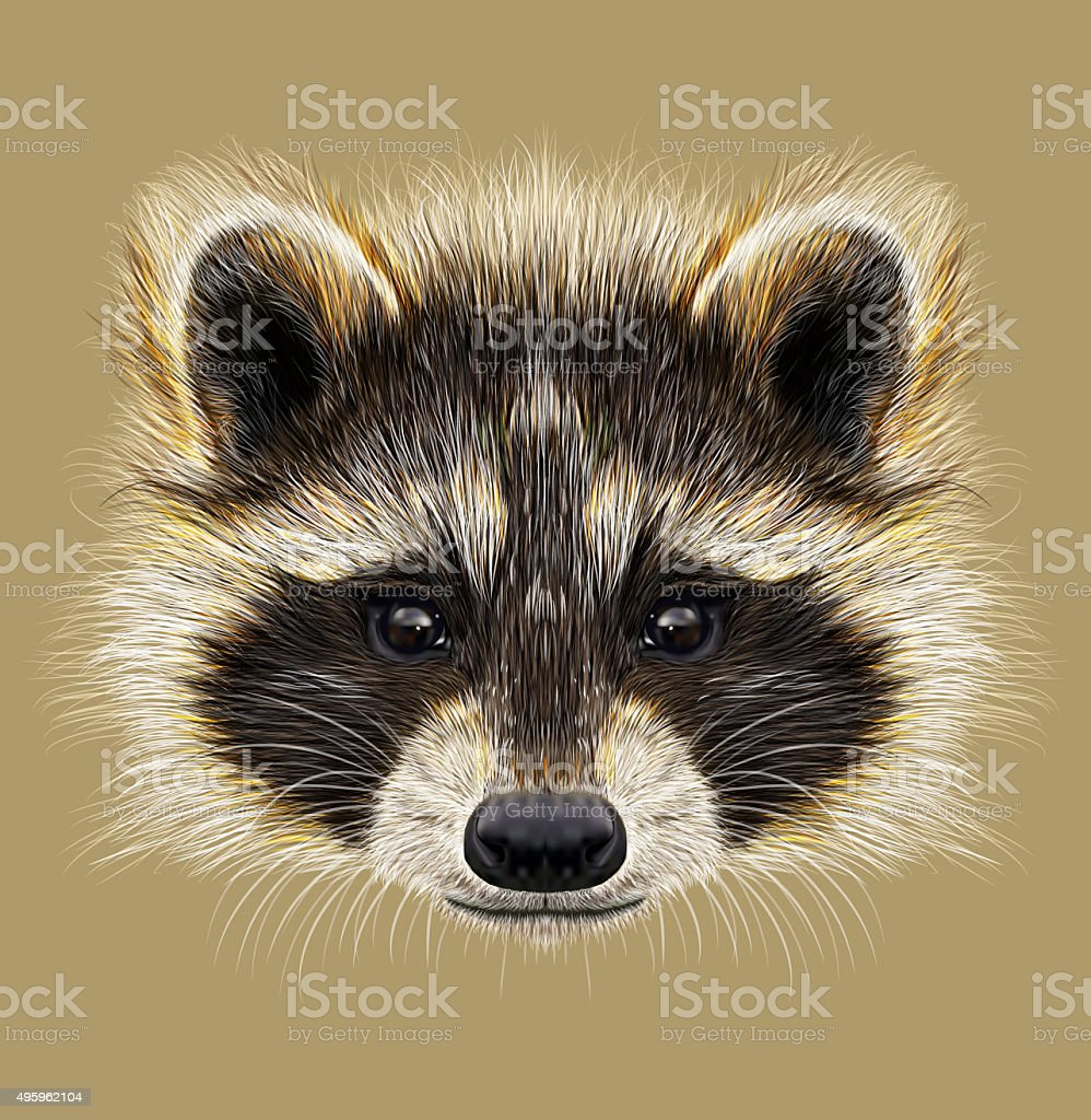 Illustrated Portrait of Raccoon Forest common mammal of North America and Eurasia 2015 stock illustration