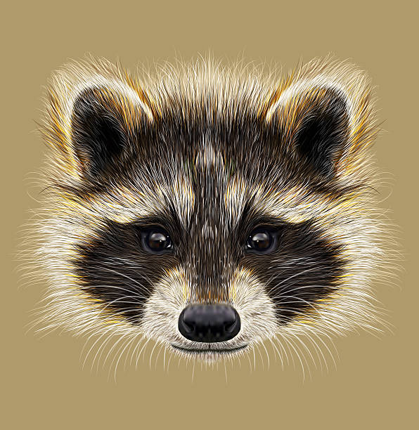 Royalty Free Raccoon Clip Art, Vector Images ... Raccoon Face Illustration